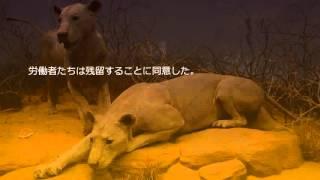リアル怖い話 「ツァボの人食いライオン 前編」