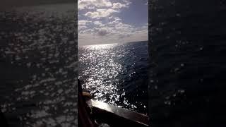 На корабле, Тунис Махдия. Дельфинчик