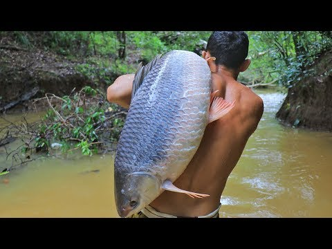 Amazing! Cooking Biggest Fish 26.5kg In Forest Eat To Survival