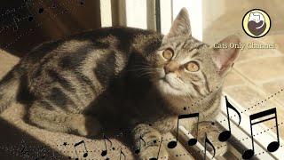 Música para gatos estresados  Ronroneo del gato y música de piano relajante