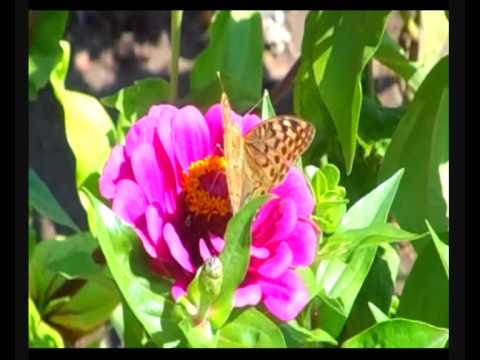 Королевство бабочек