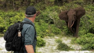 Cyril gets charged by elephants! - Chasing Monsters