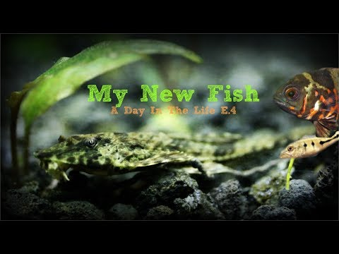 Baby Fish| Oscar, Peacock Bass, Catfish...A Day In The Life
