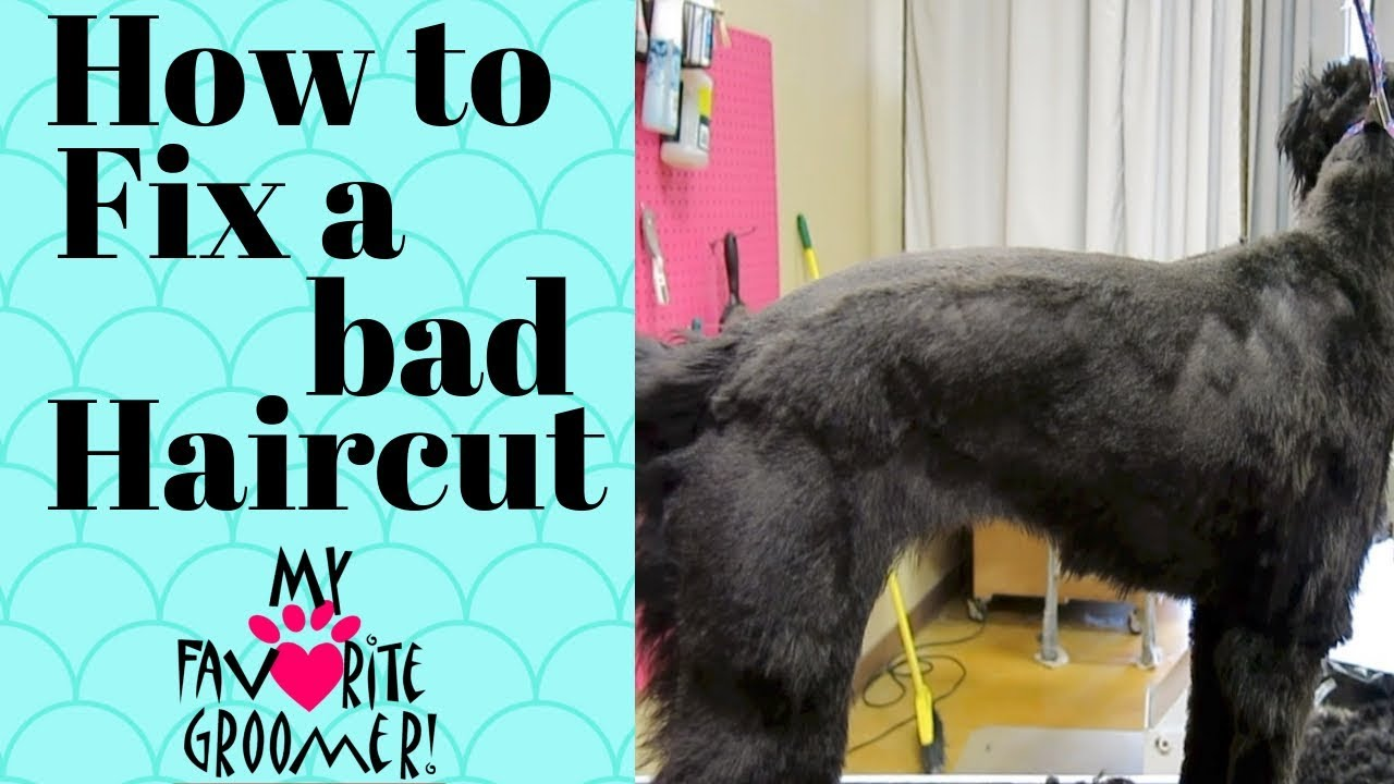 Fixing A Bad Haircut Youtube