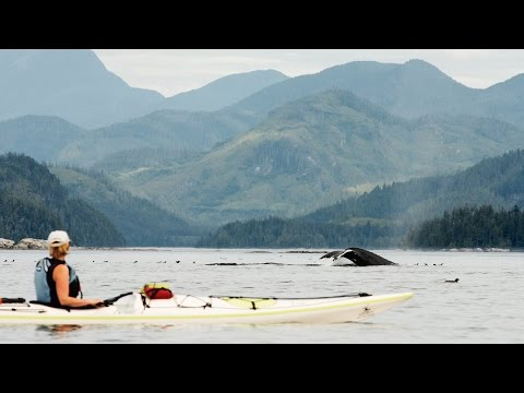 kayak-the-realm-of-the-whales-in-british-columbia