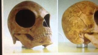 The Sealand Skull is proof of Aliens