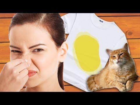 Как вывести запах кошачьей мочи с одеяла в домашних условиях