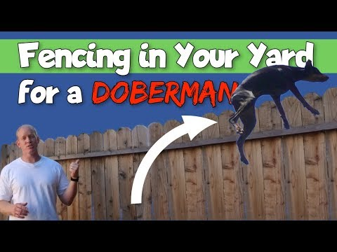 Simple Tricks for Keeping Your Doberman from Jumping Your Fence