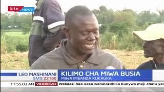 Wakulima wa miwa Busia watoa kilio baada ya miwa kukosa kuchukuliwa