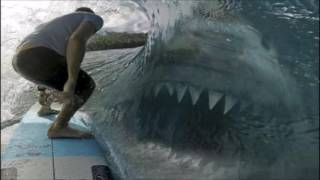 Evidence of a 50 Ton Megalodon