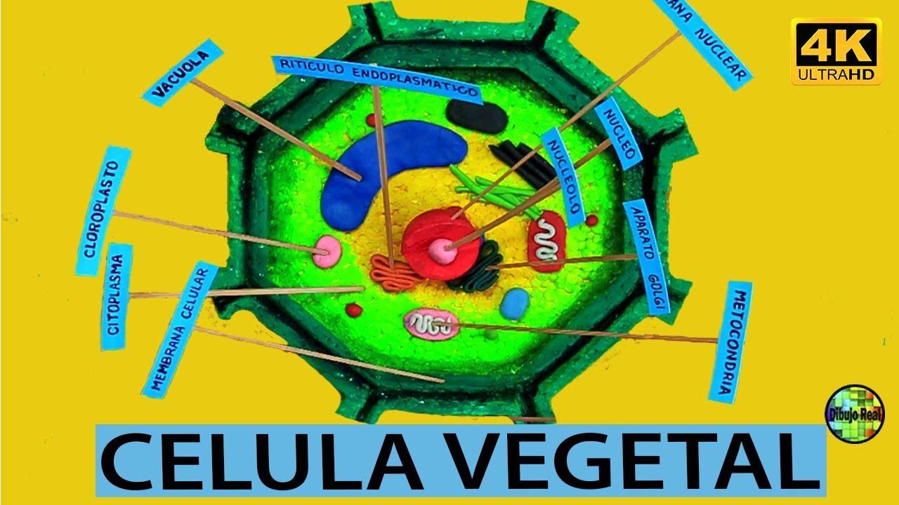 Cómo Hacer Una Maqueta De Celula Vegetal Paso A Paso Facil