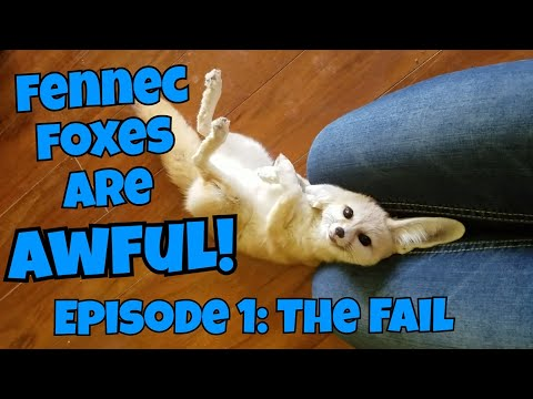 Fennec Foxes Are AWFUL! Episode 1: The Fail
