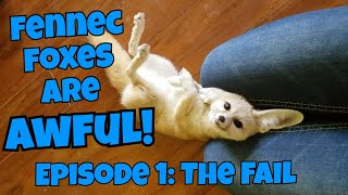 Fennec Foxes Are AWFUL! Episode 1: The Fail thumbnail
