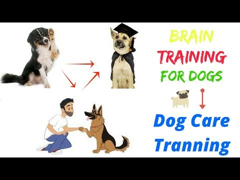 brain-training-for-dogs-review-2018---dog-tranning|dog-day-care