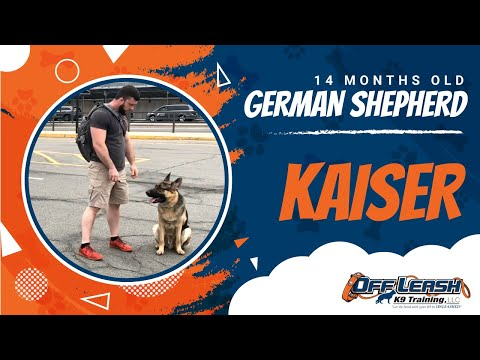Home – Green Bay Dog Trainers | Off Leash K9 Training Green