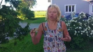 Попробовать surströmming / сюрстремминг очень интересно