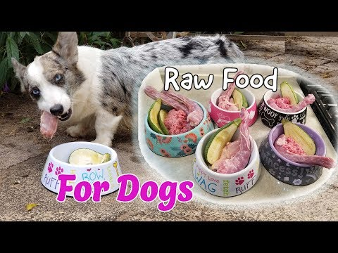 What My Dogs Eat In A Week | Feeding Raw Meat & Bone