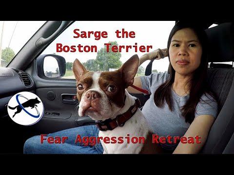 Dog - Dog Fear Aggression And Anxiety Rehabilitation Vlog