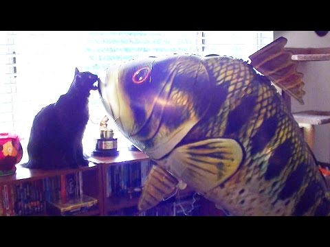 Cats React to GIANT Fish Balloon!