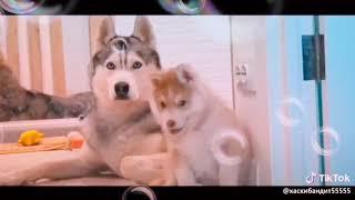 Клип собачка Бубл