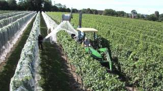 Repeat youtube video Newport Vineyards Grape Harvest