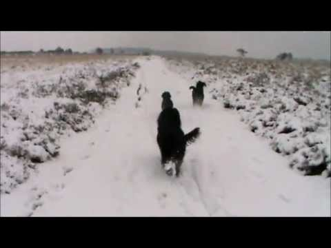 Barbets in the snow HD