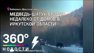 Жители в страхе: медведь-шатун появился в окрестностях Байкальска. Видео