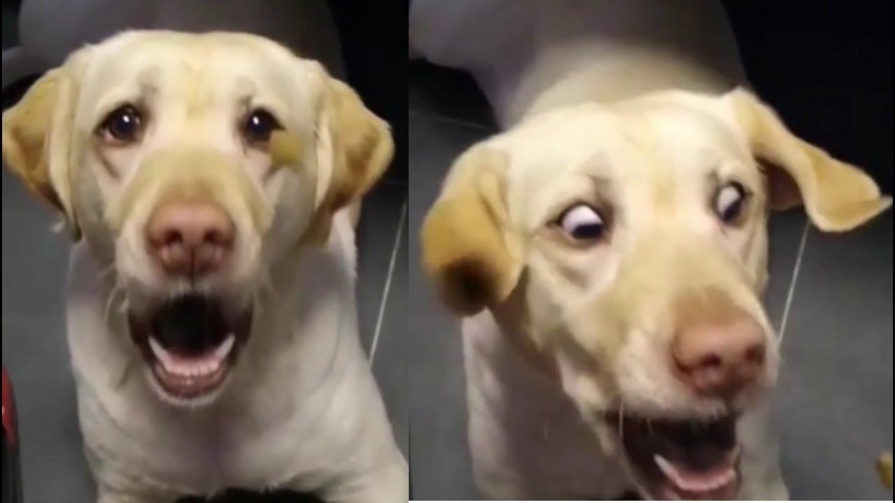 넋놓고 보게되는 기분좋아지는 강아지 영상 #16 satisfying video