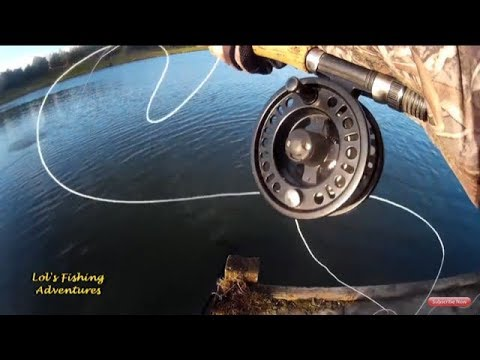 A Day at Knitsley Mill fishing with The Cats Whiskers