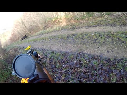 Battue Et Tir De 3 Sangliers Au Mm Poste /3 Shot Boar/3 Jabali Disparo