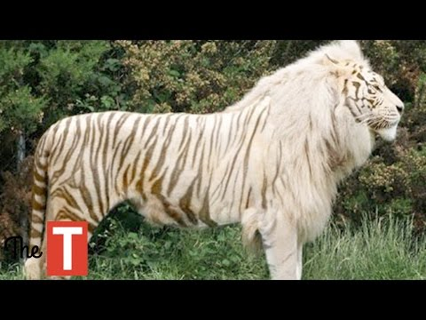 10 Common Animals That Look Out Of This World !