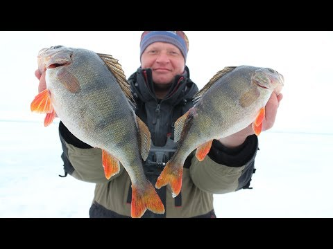 THEY DON'T LEAVE IN THE MOUNT AND BREAK THE MUSHROOMS !!! Catch a perch on the last ice.