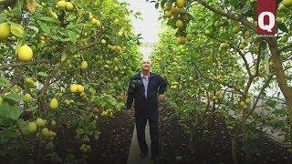 Лимонный рай Шевкыя Шерфединова