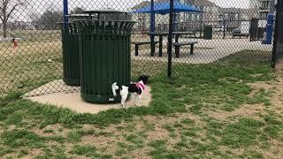 Dog Park Mud Island Mississippi River flood 2019 #LiddleCitizen We Rate Dog Parks ♦️ Reed Mathis R3