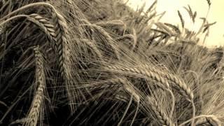 Kaukoras - Aglala