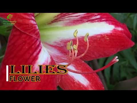 top-25+-beautiful-flowers-in-bloom-in-the-world-with-relaxing-|-nature-sounds-|-nature-video