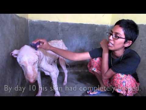 Помогли собаке выжить
