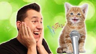 ביטבוקס עם חתול | חתולים מצחיקים