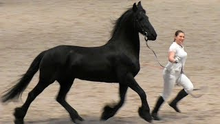 ФРИЗ на выставке #ИППОсфера 2019 / Фризская порода лошадей / Международная конная выставка  /Лошади