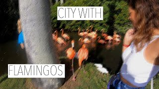 CITY WHERE YOU CAN MINGLE WITH FLAMINGOS!
