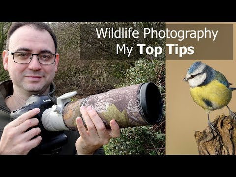Wildlife Photography For Beginners: 5 Tips With Paul Miguel Photography