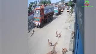 Leopard attack on empty streets//ফাঁকা রাস্তায় চিতাবাঘ আক্রমন