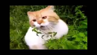 Лучшие Приколы с кошками  Ржач. Кошачьи приколы.