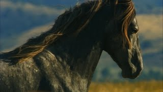 Rock Star Mustangs Roam the Utah Desert