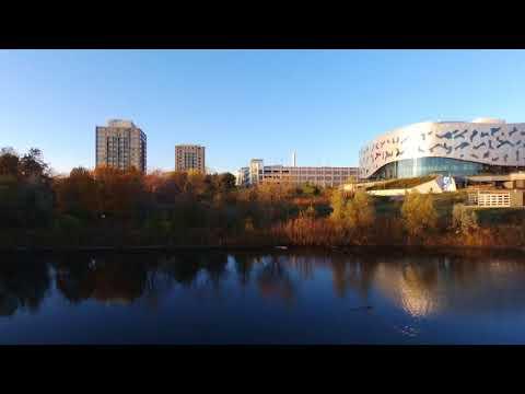 York University Stong Pond