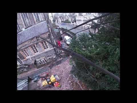 Tree Removal Camden – GraftinGardeners: 0208 123 7653