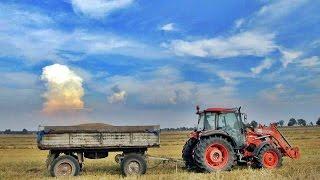 żniwa 2014 pszenica    claas mercator 50