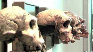 Human Evolution: Oldest Evidence Of Stone Tool Use