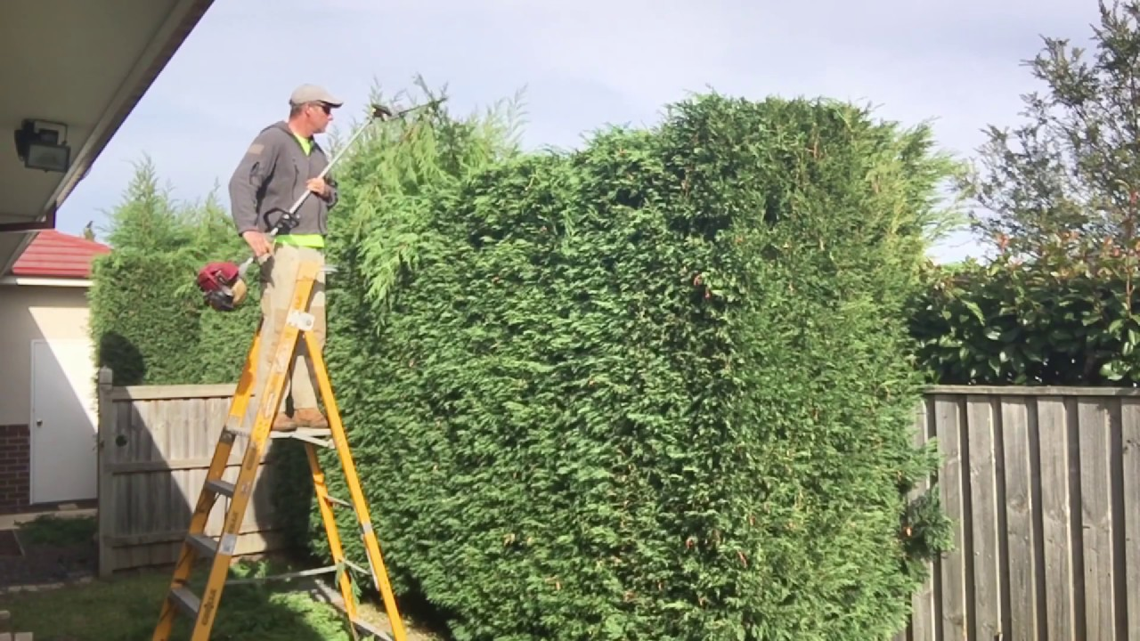 hedge trimming how to get that straight edge how to trim a. Black Bedroom Furniture Sets. Home Design Ideas