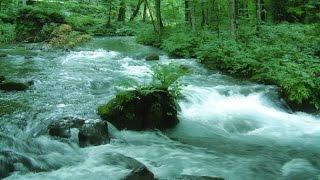 【 DNA repair anti-aging】Babble of the river+Solfeggio 528 Hz 若返り・DNA修復・記憶力UP・病気治療 ソルフェジオ528Hz+自然の音